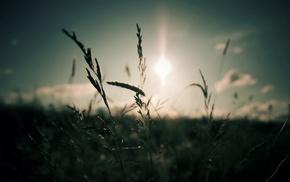 depth of field, Sun, nature, photography, plants