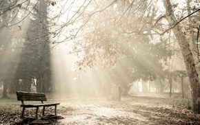 photography, trees, bench, park, sun rays, nature