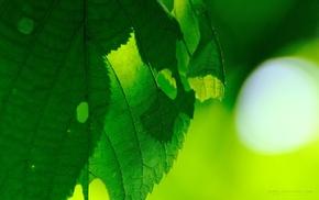 photography, nature, macro, plants, leaves