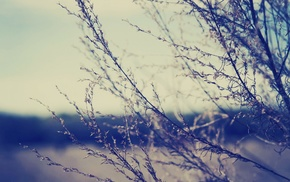 photography, depth of field, plants, nature