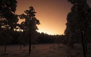 nature, plants, photography, winter, forest, dusk