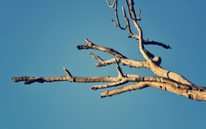 branch, plants, photography