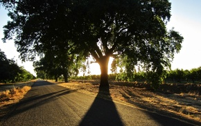plants, nature, photography, trees, summer, road