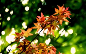 plants, depth of field, photography, nature, leaves