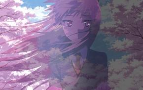 Sakurasou no Pet na Kanojo, Shiina Mashiro, cherry trees, long hair, wind, cherry blossom