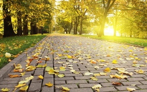 park, pavements, leaves, photography, Sun, trees