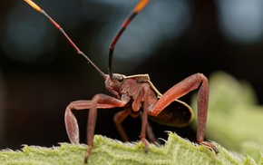 nature, insect, macro