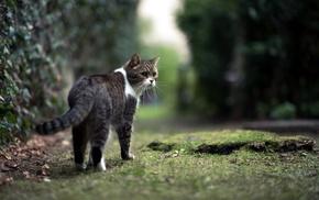 mammals, cat