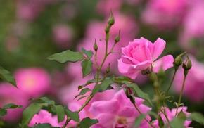 plants, flowers, macro