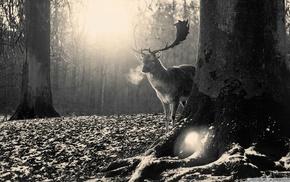 black, trees, monochrome, gray, deer, nature