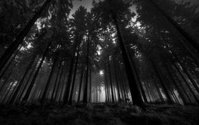 black, white, trees, landscape, nature