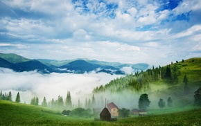 morning, landscape, mountains, mist, grass, pine trees