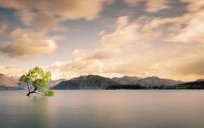 trees, calm, forest, sea, mist, lake