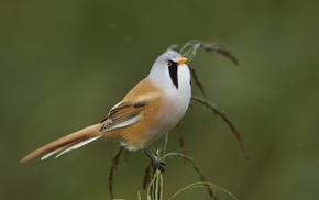 animals, photography, birds, nature