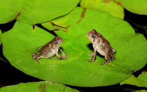 macro, amphibian