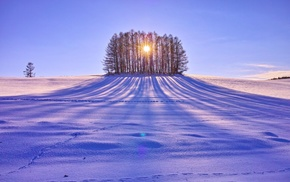 trees, winter, snow, sunlight, landscape