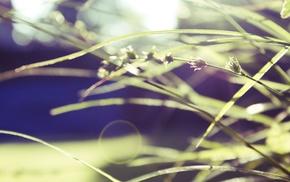 macro, nature, plants, photography