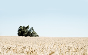 landscape, field, wheat, nature, photography, trees