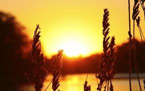 photography, macro, nature, water, plants, sunset