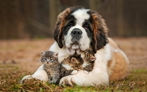 animals, dog, cat