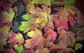 nature, leaves