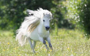 animals, photography, horse