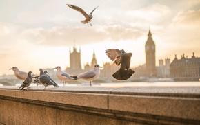 birds, animals, London, photography