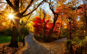 photography, sunlight, fall, landscape, road