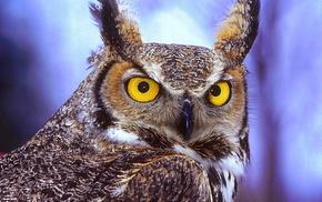 birds, owl, animals, photography