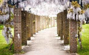 path, wisteria, petals, pillar, flowers, bricks
