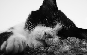 cat, animals, monochrome