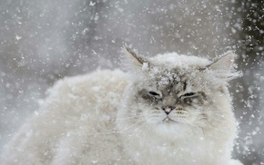 snow flakes, cat