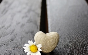 wooden surface, flowers, love, stones, photography, white flowers