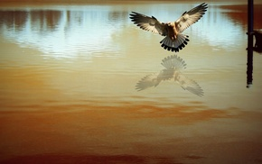 photography, reflection, nature, birds, water, photo manipulation