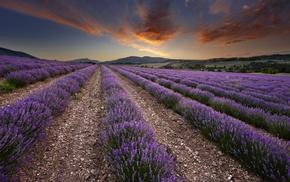field, photography, nature, lavender, plants, landscape