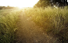 trees, Sun, plants, photography, nature, path