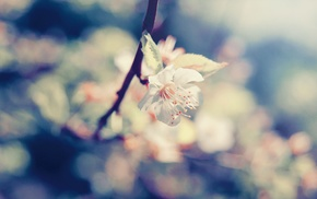 branch, plants, flowers, macro, nature, photography