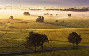 mist, photography, trees, nature, plants, landscape