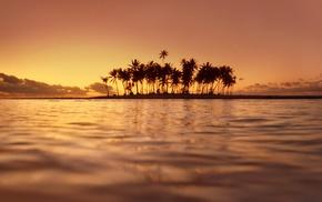 island, palm trees, sea, sunset, water, nature