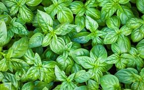 green, plants