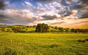 nature, trees, plants, photography, landscape, field