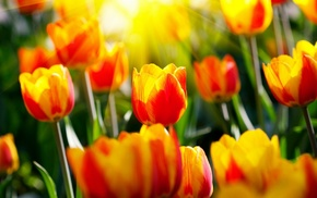 grass, plants, tulips