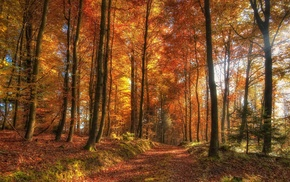 trees, orange, sun rays, dirt road, sunlight, nature