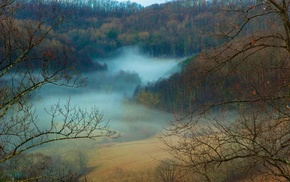forest, nature, fall, mist, daylight, landscape