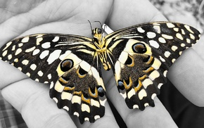 hands, insect, selective coloring, butterfly