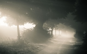 nature, photography, path, trees, mist, landscape