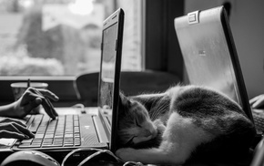 laptop, monochrome, sleeping, work, desk, ASUS
