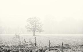 landscape, mist, photography, plants, nature, trees