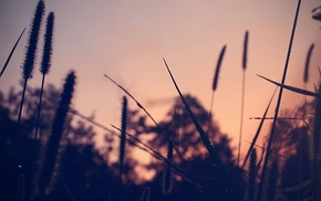 depth of field, trees, plants, nature, photography, sunset