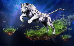 animals, white tigers